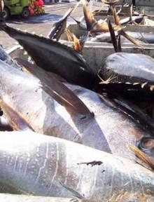 Atun-pesca